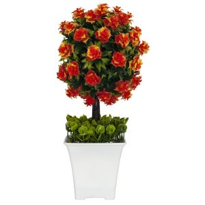 Small Shrub with Vibrant Orange Flowers in White Plastic Pot